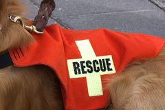 Cão da busca e do salvamento. Fotografia de Stock