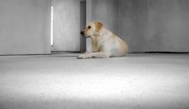 Cão da casa nova Fotografia de Stock
