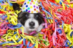 Cão da celebração do partido Fotografia de Stock