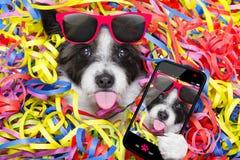 Cão da celebração do partido Foto de Stock