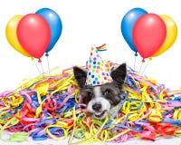 Cão da celebração do partido Imagem de Stock Royalty Free