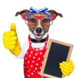 Cão da dona de casa Fotos de Stock