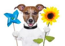 Cão da energia de Eco Fotografia de Stock