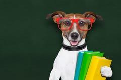 Cão da escola Fotos de Stock