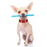 Cão da escova de dentes imagem de stock