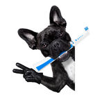 Cão da escova de dentes Foto de Stock