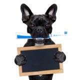 Cão da escova de dentes elétrica Foto de Stock Royalty Free