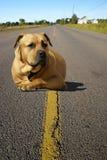 Cão da estrada Foto de Stock Royalty Free