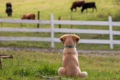 Cão da exploração agrícola imagens de stock royalty free