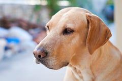Cão da família foto de stock