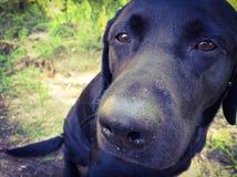 Cão da família Fotos de Stock