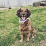 Cão da felicidade? Fotografia de Stock