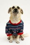 Cão da forma fotografia de stock royalty free