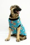 Cão da forma fotografia de stock