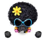 Cão da hippie Fotografia de Stock Royalty Free
