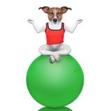 Cão da ioga Fotos de Stock Royalty Free
