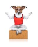 Cão da ioga Imagens de Stock Royalty Free