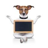Cão da ioga Foto de Stock Royalty Free