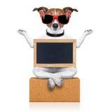 Cão da ioga Fotografia de Stock Royalty Free