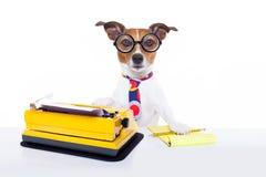 Cão da máquina de escrever do secretário imagens de stock