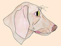 Cão da margarida Imagem de Stock Royalty Free