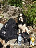 Cão da montanha Imagem de Stock Royalty Free