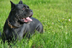 Cão da oferta na grama Fotografia de Stock Royalty Free