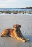 Cão da praia Imagem de Stock Royalty Free