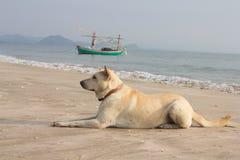 Cão da praia foto de stock