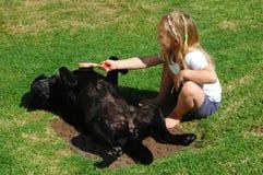 Cão da preparação da criança Foto de Stock Royalty Free