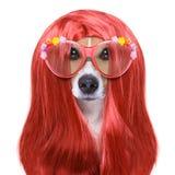 Cão da preparação nos cabeleireiro foto de stock