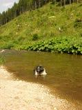 Cão da raça de Shihtzu que toma um banho Fotografia de Stock