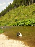 Cão da raça de Shihtzu que toma um banho Imagens de Stock