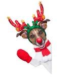 Cão da rena Imagem de Stock