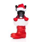 Cão da rena Foto de Stock