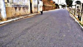 Cão da rua Fotografia de Stock