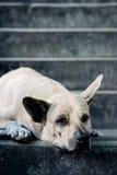 Cão da rua Fotos de Stock Royalty Free