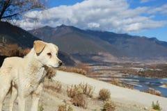 Cão da rua Imagem de Stock Royalty Free