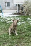Cão da rua Fotografia de Stock Royalty Free