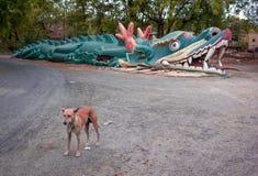 Cão da rua Fotos de Stock