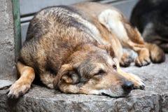 Cão da rua do sono imagem de stock