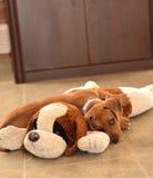 Cão da salsicha Imagens de Stock