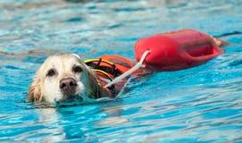 Cão da salva-vidas Imagem de Stock