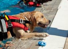 Cão da salva-vidas Fotografia de Stock Royalty Free