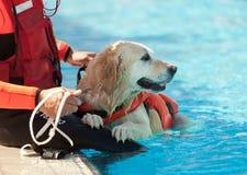 Cão da salva-vidas Fotos de Stock Royalty Free