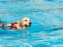 Cão da salva-vidas Fotografia de Stock