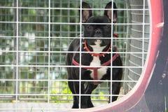 Cão da segurança Foto de Stock