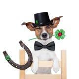 Cão da vassoura da chaminé Fotografia de Stock
