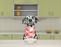 Cão dalmatian com fome com a forquilha para o jantar que senta-se na tabela na cozinha fotos de stock royalty free