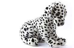 Cão Dalmatian do luxuoso Fotografia de Stock